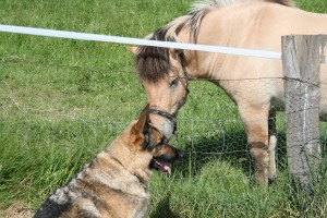 Our dog with neighbouring horse